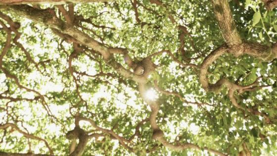 【白金】×【庭園】×【美食】 自然に囲まれてゆったりと時を楽しむ大人の為の迎賓館 アートグレイスクラブ 白金