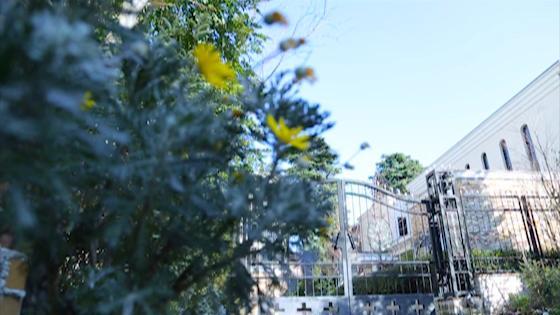 緑と光に包まれて本格挙式&披露宴が1組貸切! 目白の森 メイヤー・ライニンガーチャペル