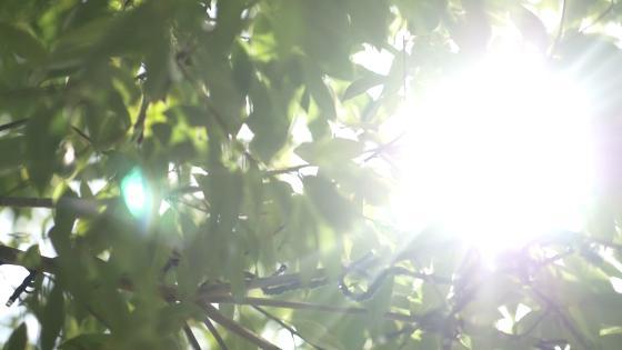 空・緑・光・水が輝く彩のゲストハウスを貸し切ってふたりらしいWを叶えよう アクアリュクス