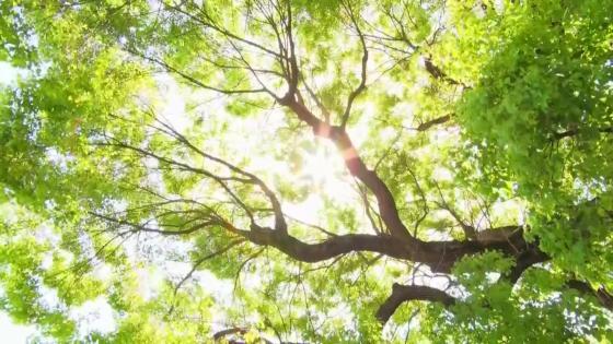 8000坪の日本庭園に圧巻の鳥居と緑に迎えられる神殿 太閤園