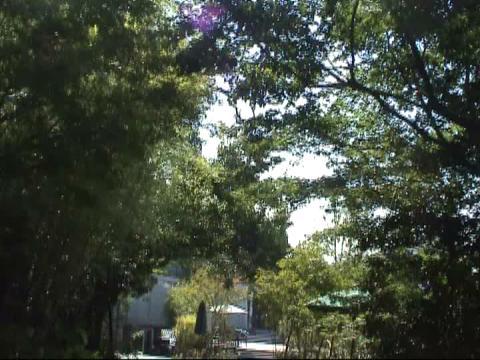 たくさんの緑に包まれ、自然光が優しくさすチャペル。中は木の温もりでいっぱい 奈良町 あしびの郷