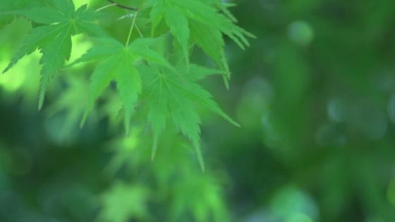 千年余の伝統を受け継ぐ 厳かな神前挙式が挙げられる 大阪天満宮