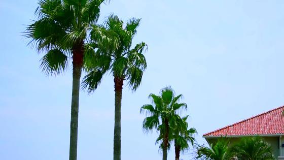 まるで海外リゾート。神戸に広がる非日常空間 ラヴィマーナ神戸(RAVIMANA KOBE)