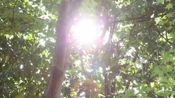 時を経てなおも美を纏う歴史空間と四季薫る庭園で、本物のもてなしを 三瀧荘