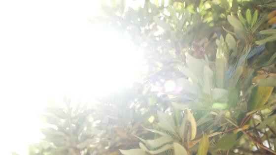 自然派イタリアンの巨匠・シェフ植竹と新郎新婦が届けるゲストへのおもてなし リストランテ カノビアーノ (ホテル雅叙園東京)