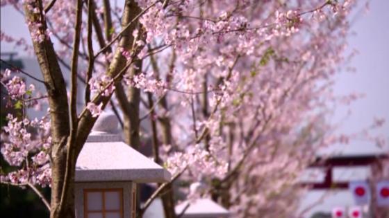 四季折々の自然と風情を感じながら、古都・鎌倉で叶える伝統と洗練の結婚式 KOTOWA 鎌倉 鶴ヶ岡会館
