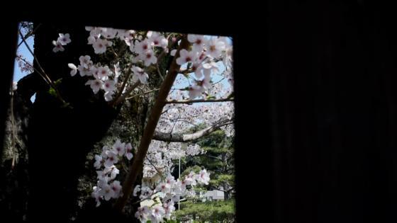 日本の伝統を今に表現する和モダンの空間とおもてなし 鶴羽根神社 二葉