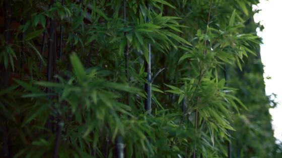 豊かな緑と洗練された空間が織りなす華やかなウエディングステージで、至福の一日を KOTOWA 京都 八坂(コトワ 京都 八坂)