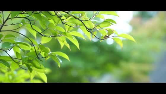 四季の彩りを優雅に愉しむ庭園と貸切邸宅 クリスタル輝くチャペルで美しい誓いを 郡山モノリス(KORIYAMA MONOLITH)