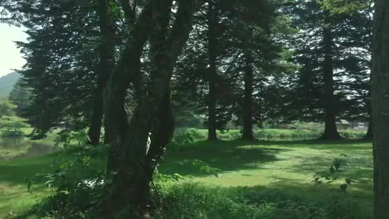 軽井沢駅近ながら開放的で豊かな自然に囲まれたホテルで結婚式も旅行も叶う 軽井沢プリンスホテル フォレスターナ軽井沢