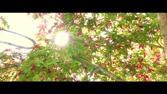 光と水に包まれる幻想的な空間で永遠の誓いを紡ぐ、心に刻まれる色褪せない記憶 MATSUYAMA MONOLITH(松山モノリス)