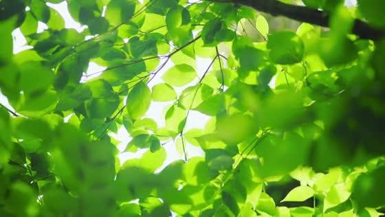 四季折々の表情が美しい森に抱かれ、大切なゲストに囲まれた祝福の時を ホテル椿山荘東京